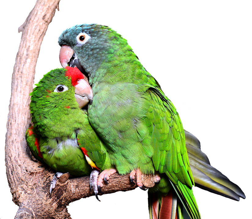 Parrot, Bird, Tropical, Animal World, Animal, Bill, Ara