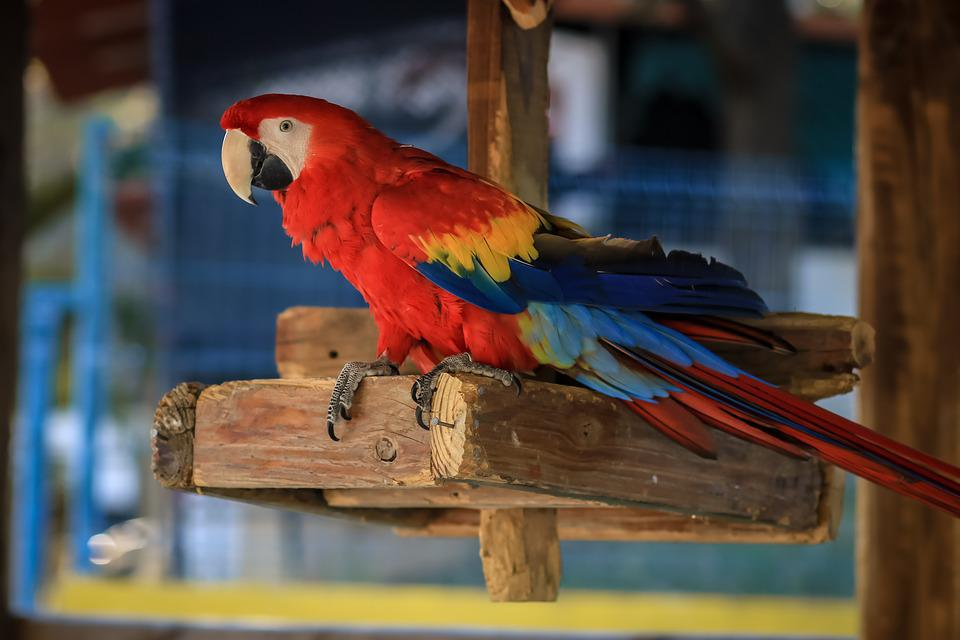 Macaw, Ave, Bird, Parrot, Animal, Tropical Bird