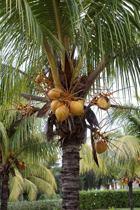 Cuba, Tropical, Summer, Vacation, Holiday, Nature