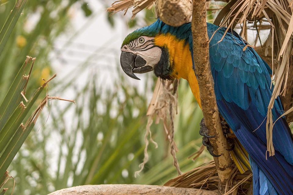 Bird, Parrot, Wildlife, Tropical, Feather, Wing, Tree