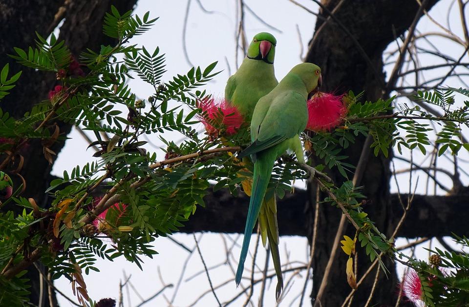 Bird, Parakeet, Green, Tropical, Parrot, Fauna, Feeding