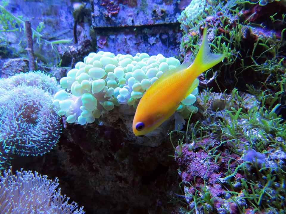 Coral, Coral Reef, Tropical Fish, Underwater Creatures