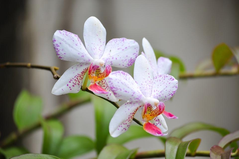 Flower, Flora, Nature, Tropical, Leaf