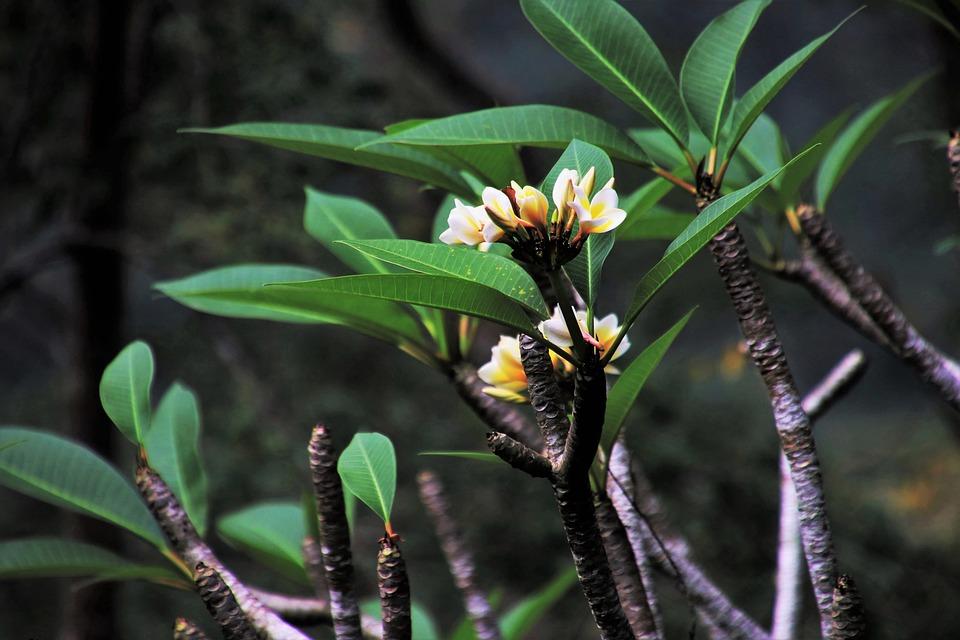 Tropical, Green, Nature, Plant, Leaf, Flower