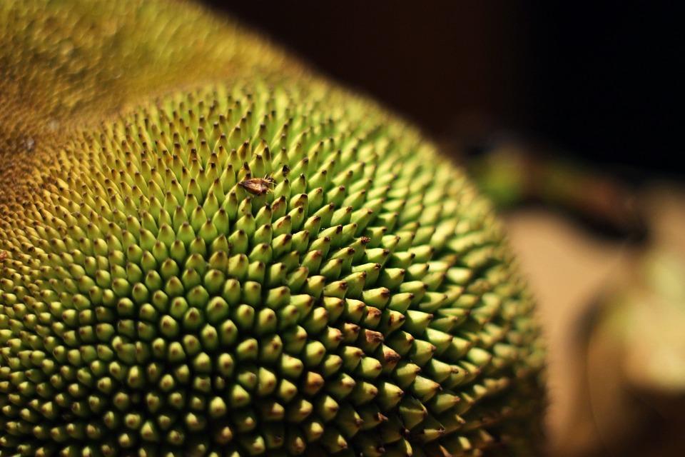 Jackfruit, Tropical Fruit, Fruit, Asian Fruit, Green