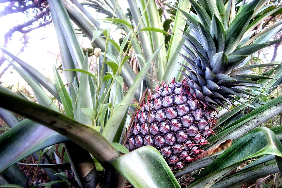 Leaf, Fruit, Pineapple, Sweet, Tropical, Exotic