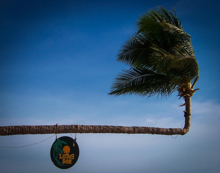 Palm Tree, Shield, Holiday, Beach, Beaches, Tropical