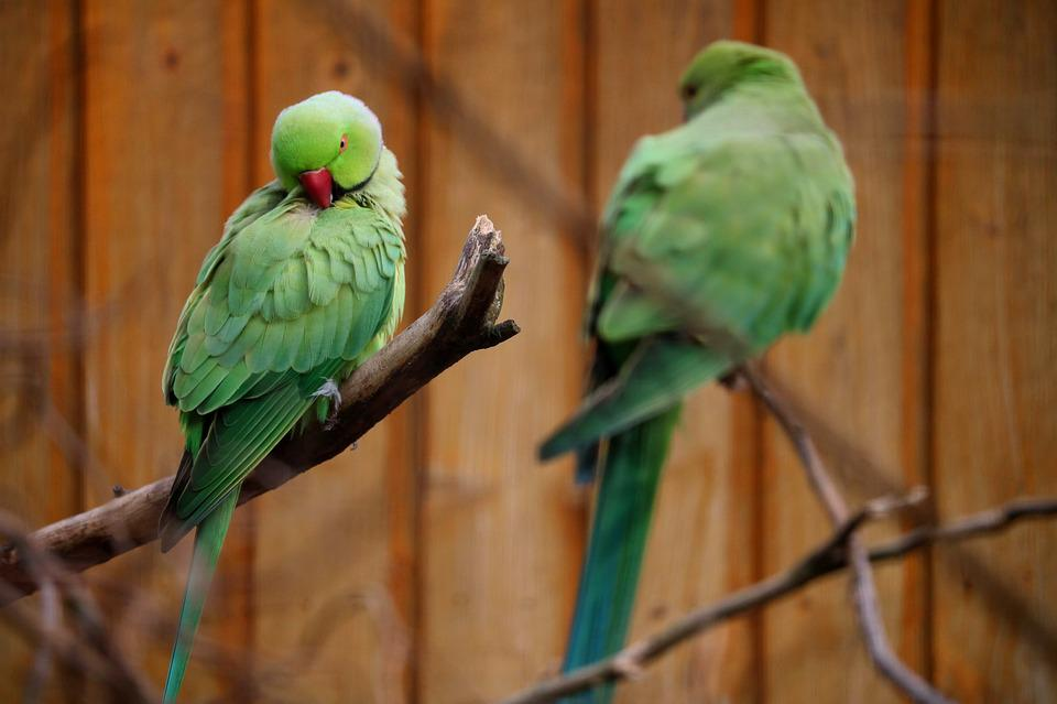 Bird, Animal World, Parrot, Nature, Wing, Tropical