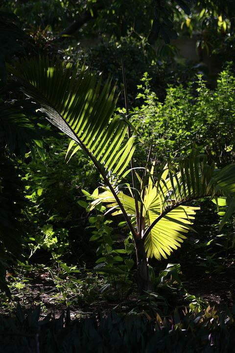 Tropical Palm, Flora, Green, Foliage, Exotic