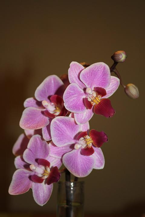 Flower, Nature, Plant, Tropical, Flowers, Orchiee