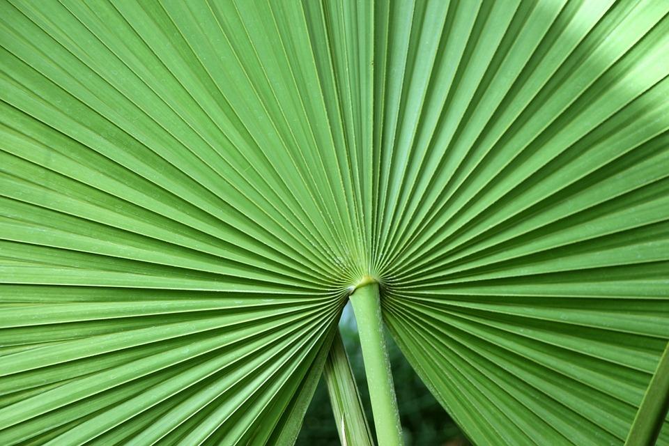 Leaf, Tropical Leaf, Tropical Plant, Palm, Palm Leaf