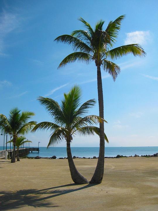 Palm, Tree, Sunny, Palm Tree, Tropical, Ocean, Summer