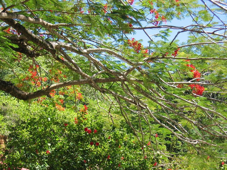 Tree, Flowers, Leaves, Tropical
