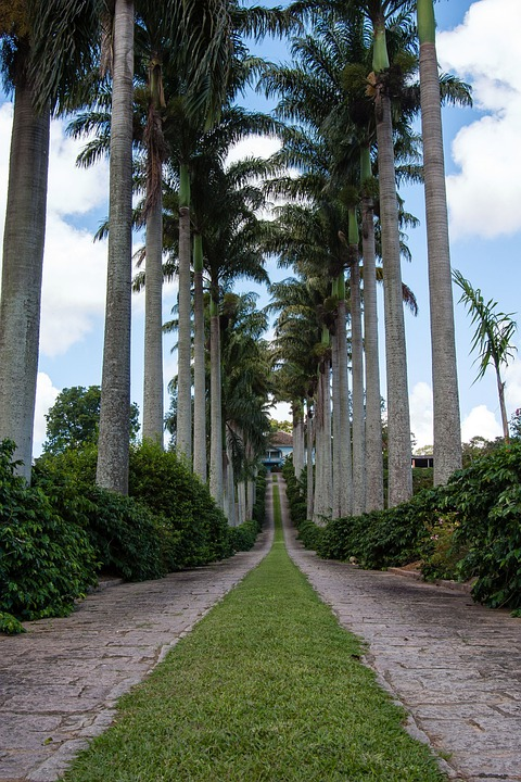 Palms, Trees, Tropical, Gardens, Gardening, Parks