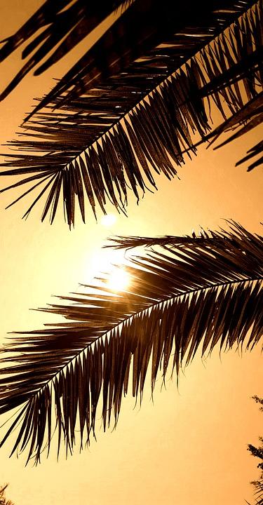 Trees, Tropical, Leaves, Sepia