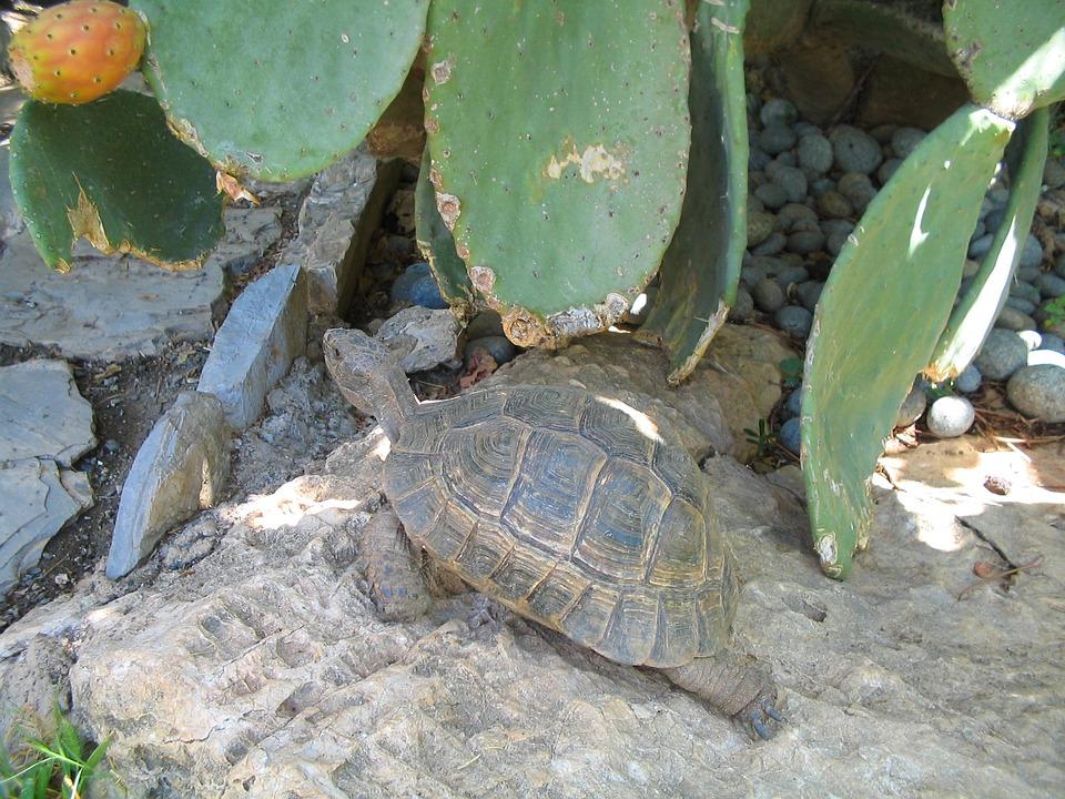 Turtle, Reptile, Nature, Wild, Wildlife, Tropical