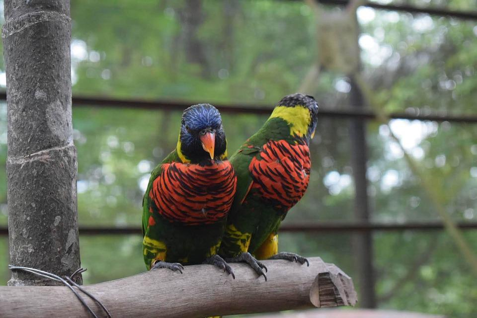 Birds, Parrot, Colorful, Tropical, Yellow