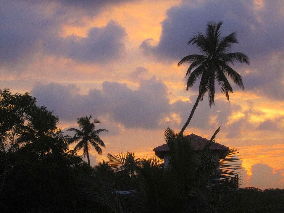 Palm, Evening Light, Sunset, Beach, Tropics, Holiday