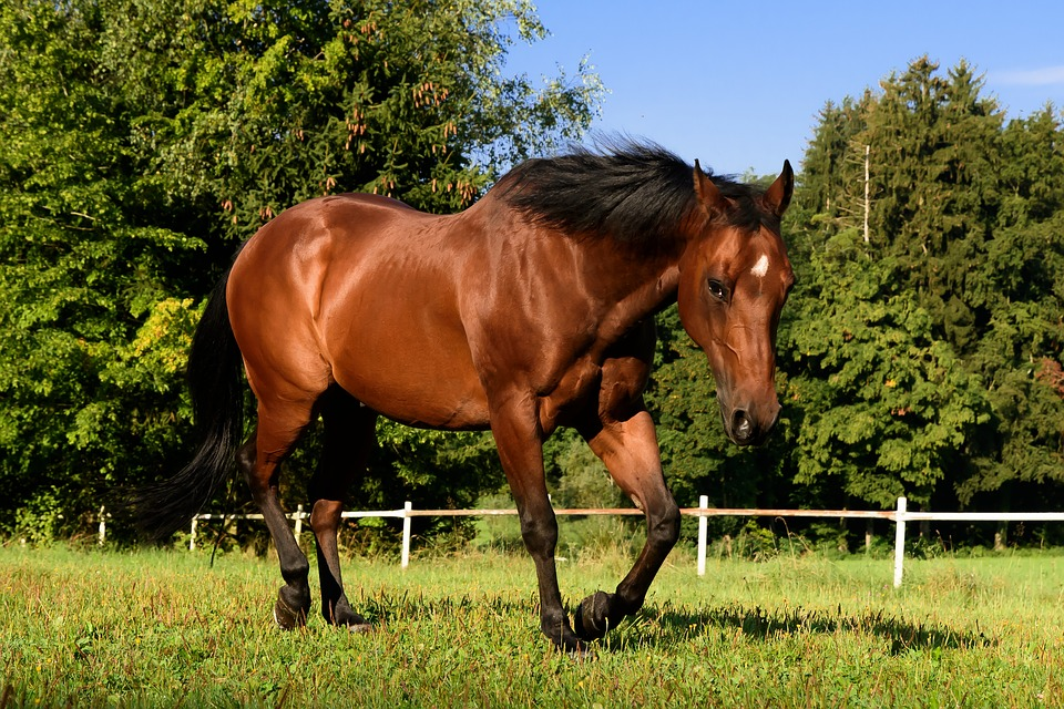 Free photo Trot Stall Ride Pasture Brown Quarterhorse Horse