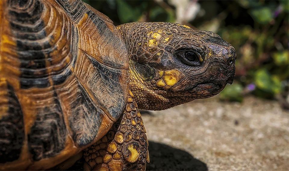 Trtoise, Turtle, Macro, Nikon, Sigma, Italy, Nature