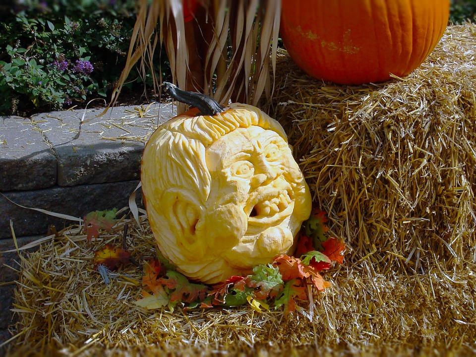 Pumpkins, Halloween, Trump, Trumpkin, Autumn, Fall