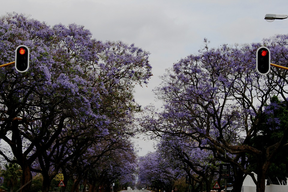 Flowers, Purple, Clusters, Trumpet Shaped