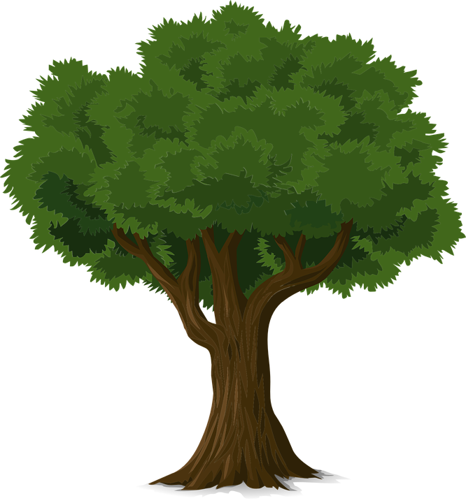 Tree, Forest, Trunk, Nature, Leaves, Branches, Organic