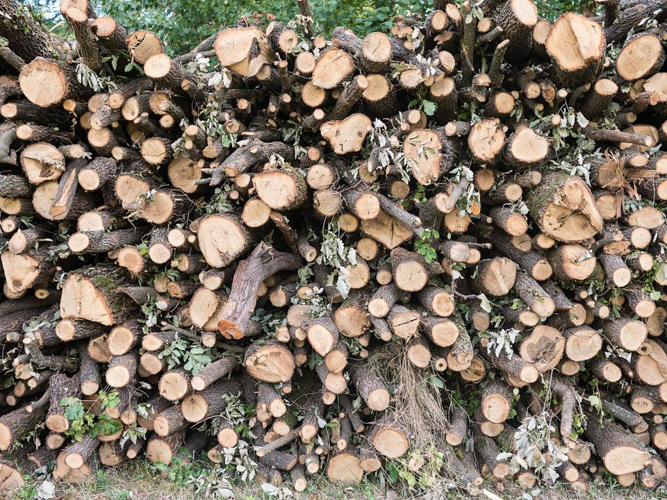 Firewood, Wood, Nature, Texture, Natural, Trunk, Pile