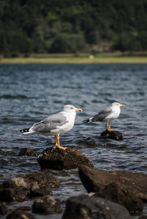 Seagulls, Lake, Park, Woods, Trunk, Preservation