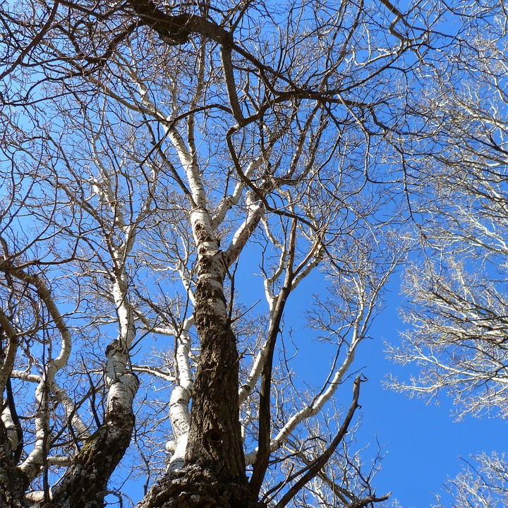 Tree, Branches, Trunk, Nature, Sky, Blue