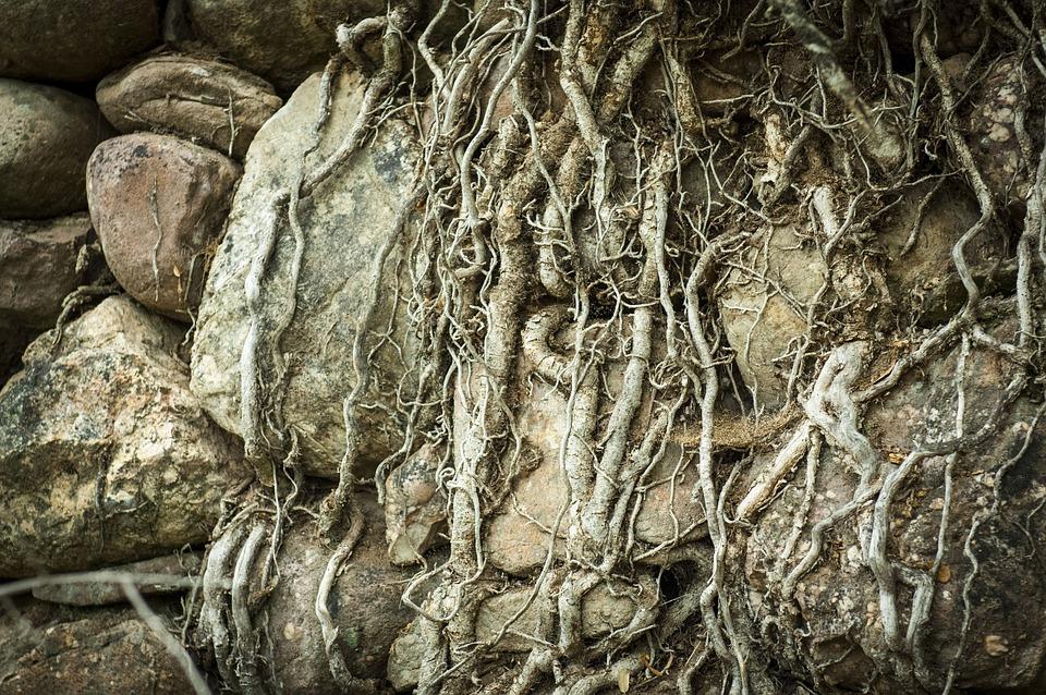 Texture, Roots, Tree, Bark, Trunk, Old, Rocks, Stones