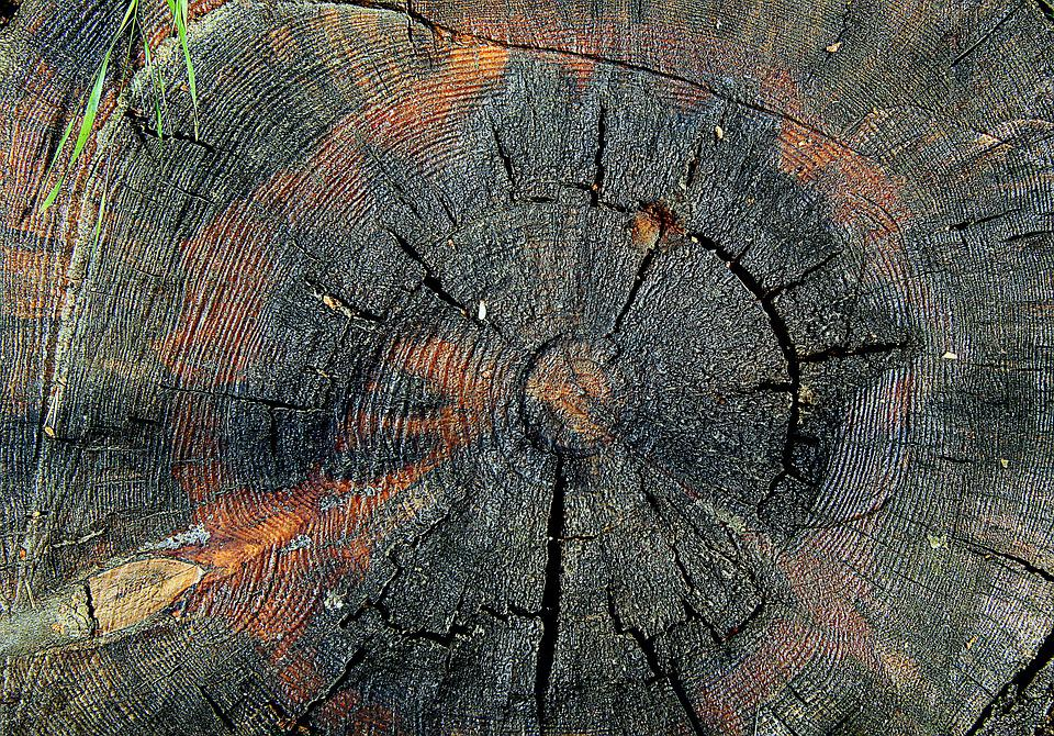 Trunk, Tree, Cross Section Of The Trunk, Jars Trunk