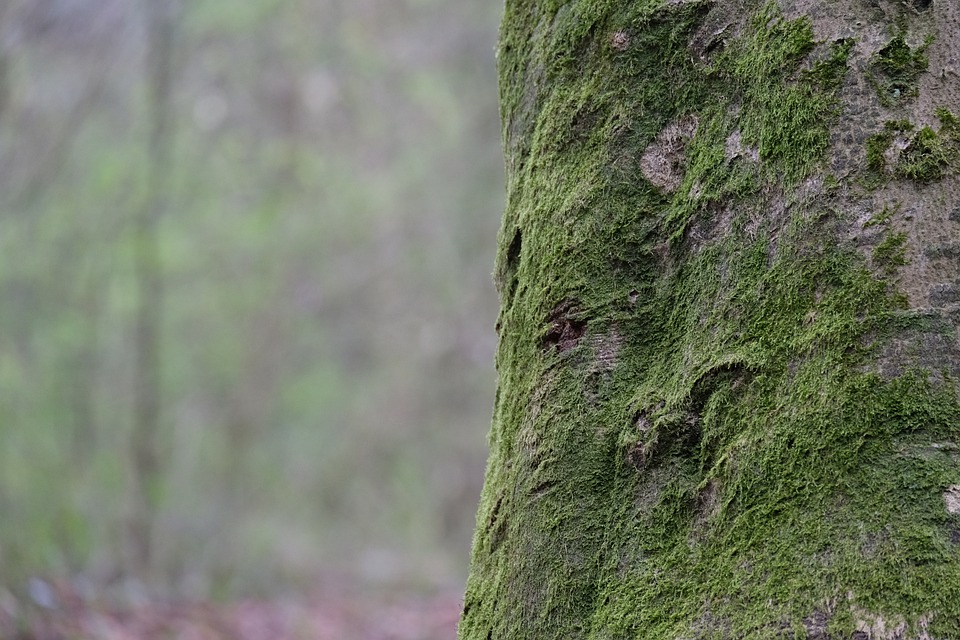 Moss, Trunk, Tree, Wood, Bark, Forest, Nature