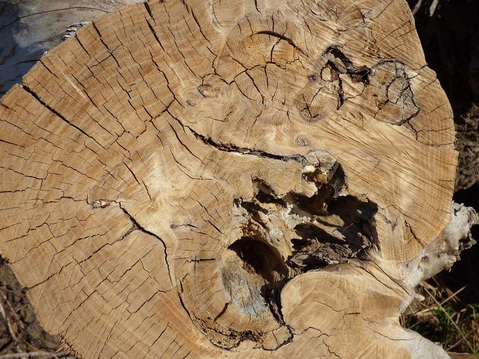Trunk, Wood, Cut Trunk, Lena