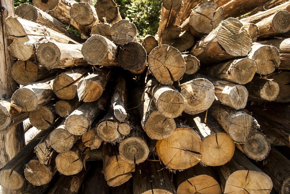 Wood, Trunks, Trunk