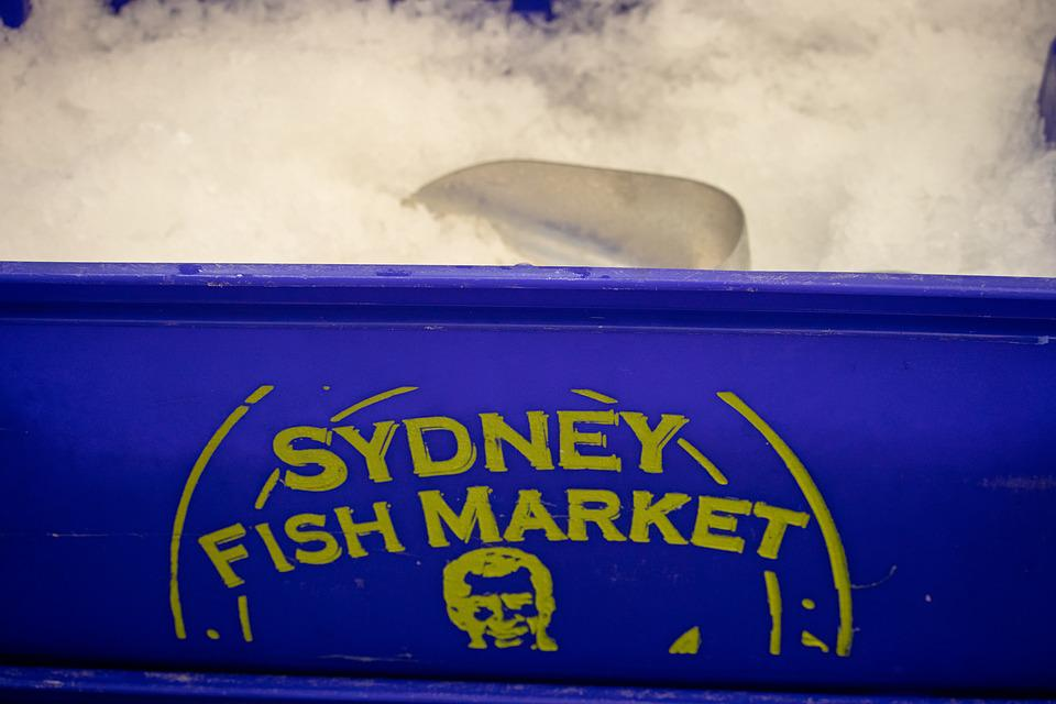Sydney, Fish Market, Ice, Tub, Bucket, Scoop