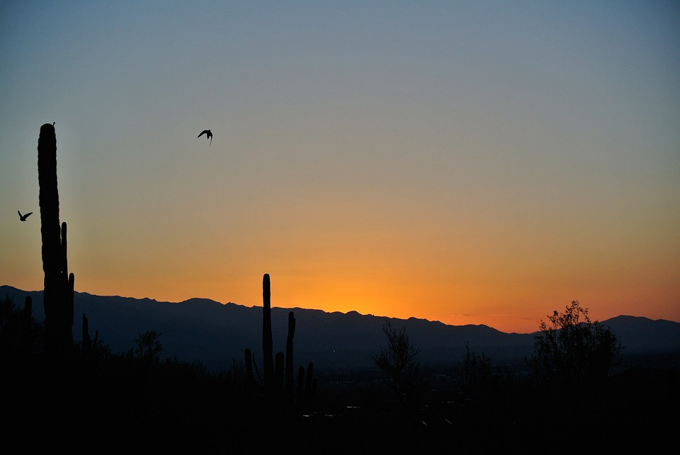 Tucson, Sunrise, Landscape, Wilderness, Scenery
