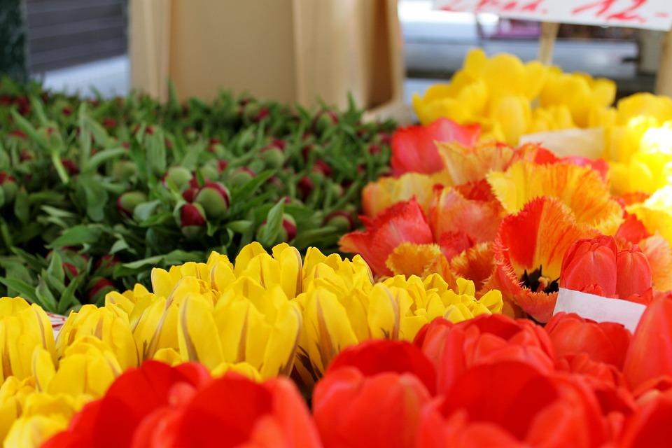 Flower, Nature, Tulip, Garden, Leaf, Tulips, Naschmarkt
