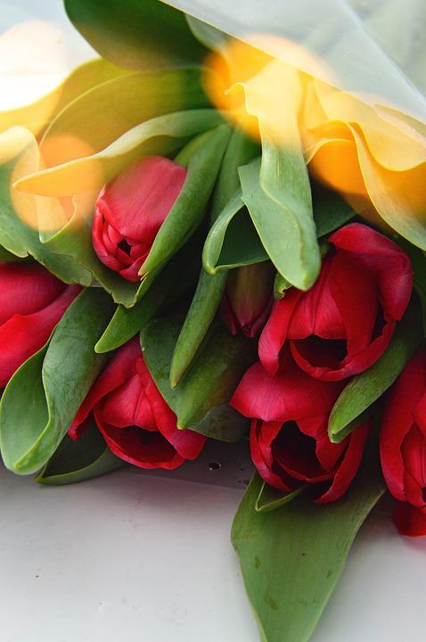 Flower, Tulip, Nature, Leaf Plants, Color, Floral