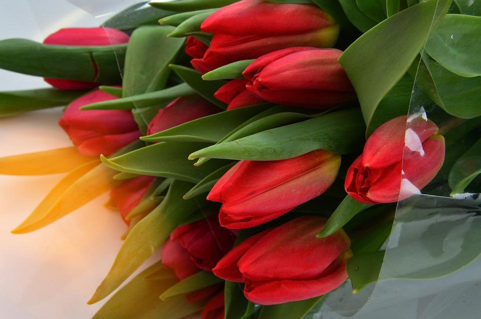 Flower, Nature, Plant, Tulip, Leaf Plants, Floral