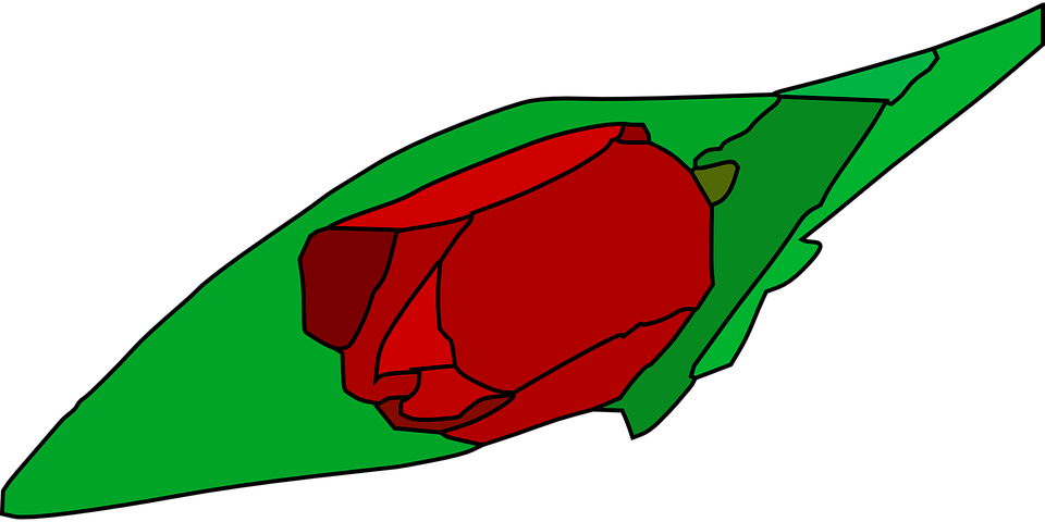 Tulip, Flower, Plant, Leaves