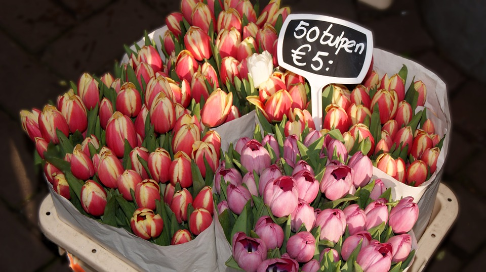 Flowers, Tulip, Network, Red, Rosa, Spring, Shop