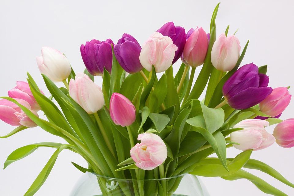 Tulip, Tulip Bouquet, Spring Flower, Bouquet
