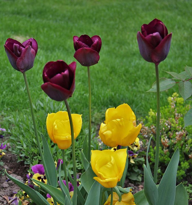Tulips In The Garden, Signs Of Spring, Small And Large