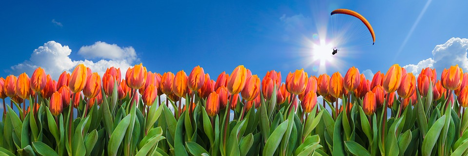 Nature, Landscape, Flowers, Spring, Tulips, Flower Bed