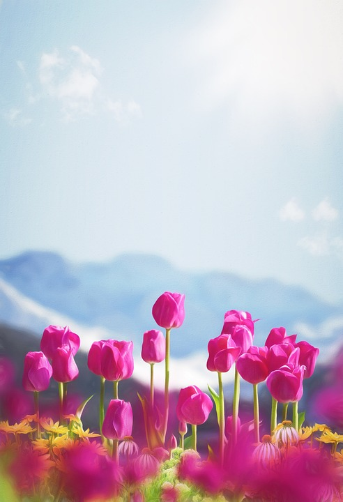 Background, Spring, Flowers, Tulips, Pink, View