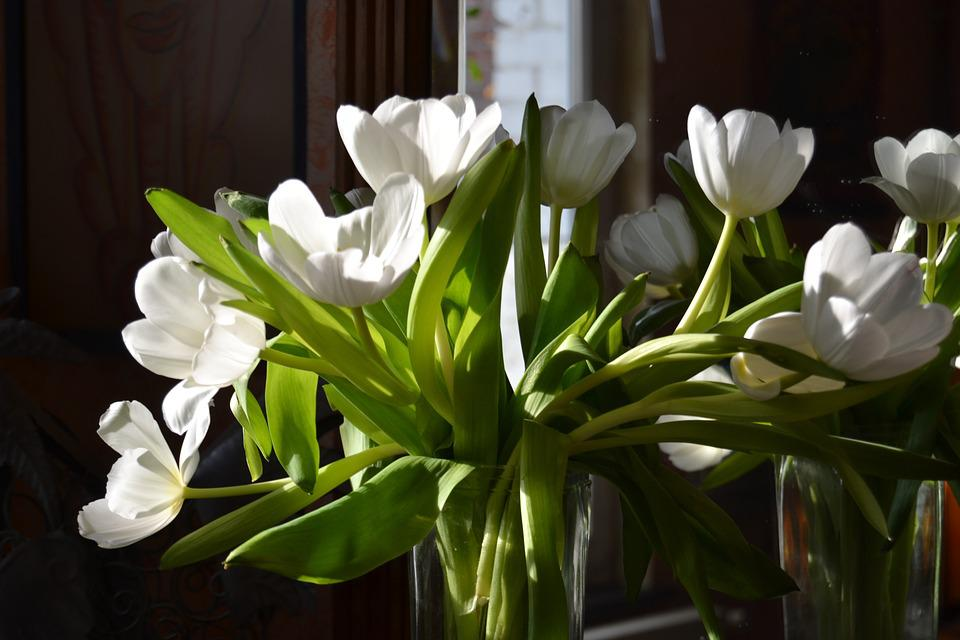 Flowers, Tulips, White, Spring