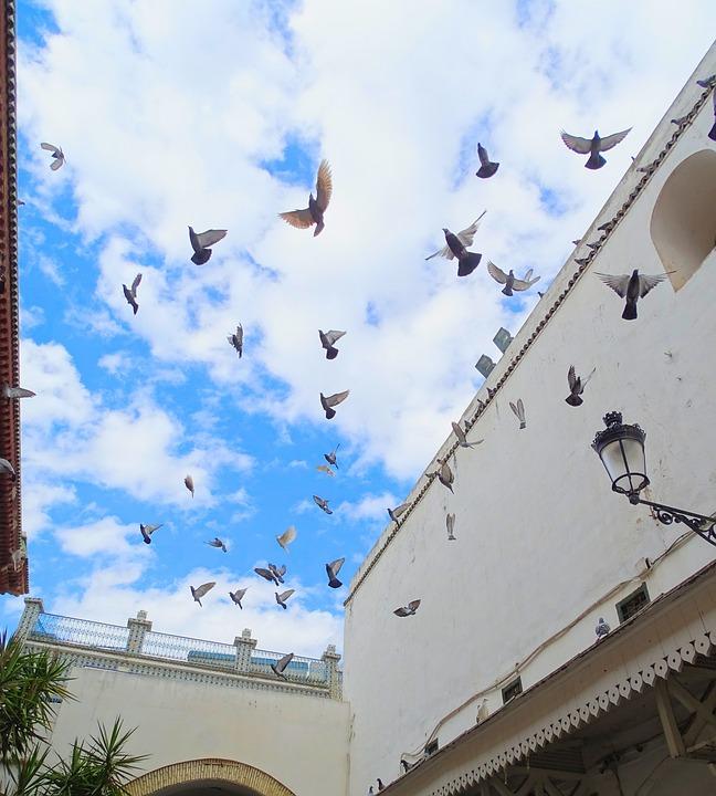 Pigeon, The Medina, Tunis, Tunisia