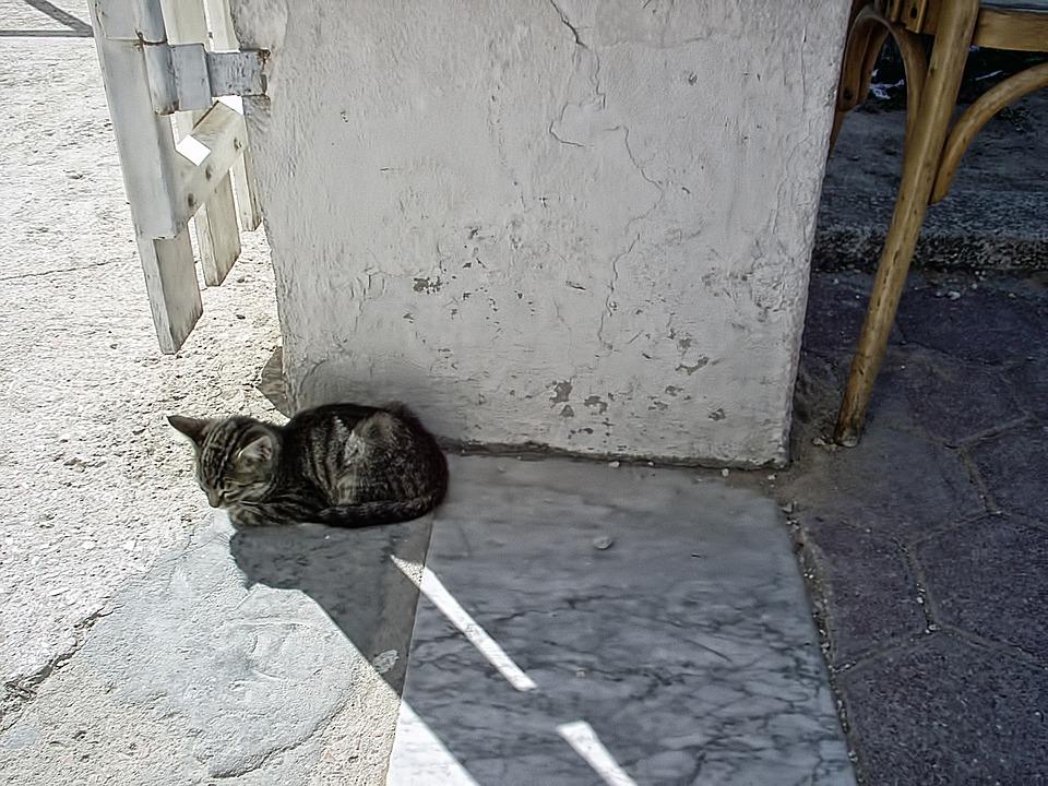Cat, Gray, Sweet, Tunisia, The Republic Of Tunisia