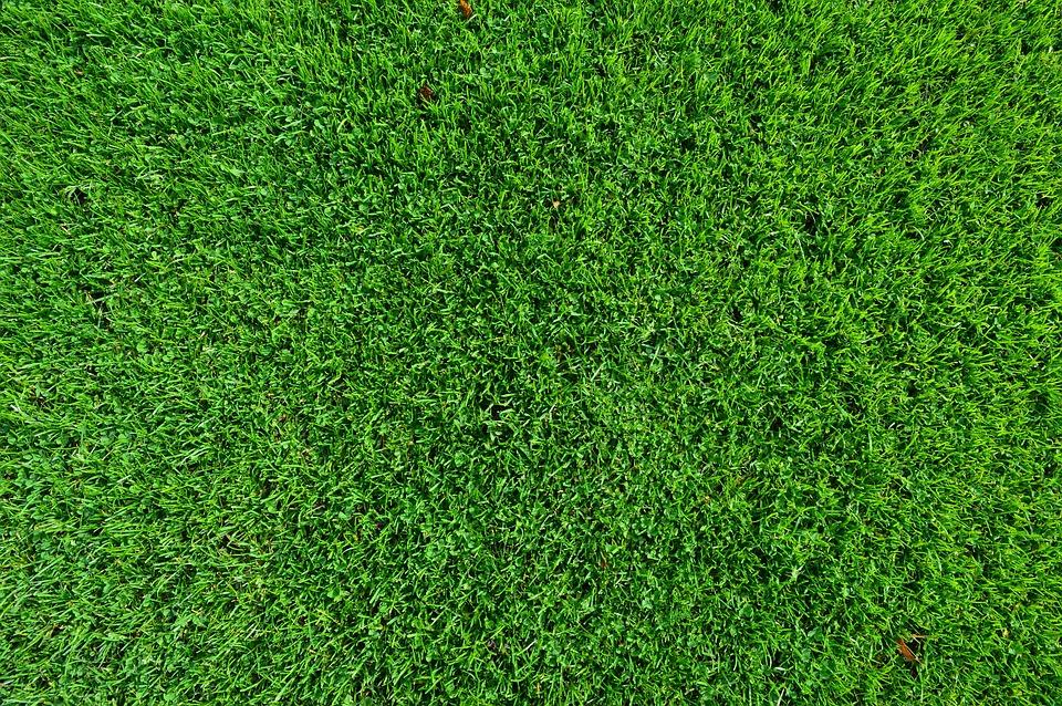 Green, Grassland, Background, Turf
